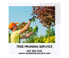 Tree Pruning Service in Anaheim CA