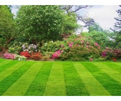 st augustine lawn care