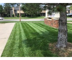 top lawn care companies