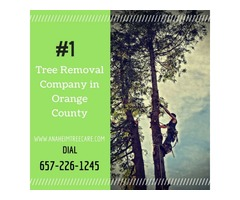 Tree Removal Orange County CA