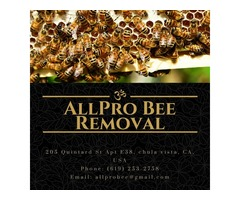 It is not less difficult to opt for Bee Removal in Orange County