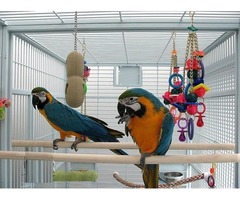 TAMED AND FRIENDLY MACAWS AND COCKATOOS FOR SALE , YOUNG AND ADULTS AVIALABLE | free-classifieds-usa.com