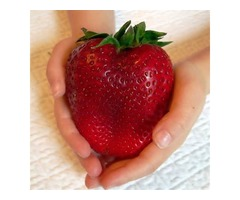 Egrow 100Pcs Giant Red Strawberry Seeds Heirloom Super Japan Strawberry Garden Seeds