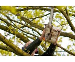 Kreczmer's Tree Service