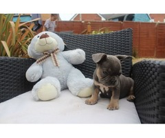 Beautiful Male and Female French Bulldog puppies for sale.