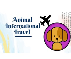Few Do's and Don'ts of Service Animal International Travel