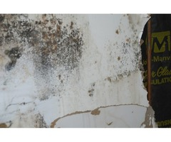 Mold Removal in Spartanburg, SC | Array of Solutions