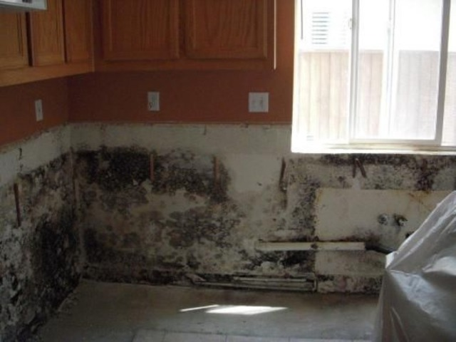 What Causes Black Mold To Grow