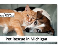 Pet Rescue in Michigan | free-classifieds-usa.com