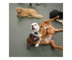 Dog Daycare San Marcos