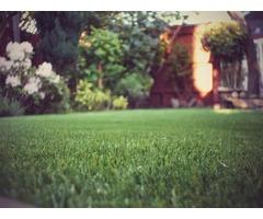 Synthetic Grass - Arizona's Best!