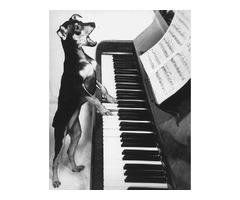 Piano Tuning in Moline, Illinois