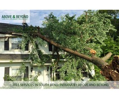 Beautiful Tree Service in South Bend