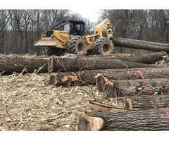 Trust How To Sell Timber In Illinois with professional