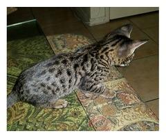 F3 Kitten availble now!