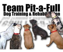 THE BEST All Breed Dog Training in Denver, CO