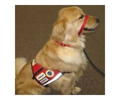 Registration Application Of Service Animal For People With Disabilities