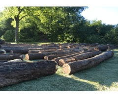 To Select Logging Company in Illinois carry out Timber