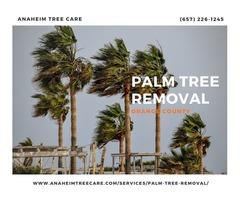 Palm Tree Removal Orange County