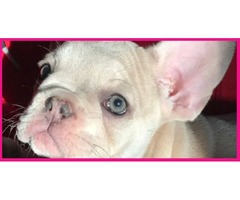 Animals - New York (United States) - Free Classifieds - page 48