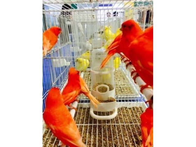 Exotic Bird Fair and Sale  | free-classifieds-usa.com