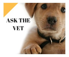 Avail low cost pet vaccination at home by Mobile vet Atlanta