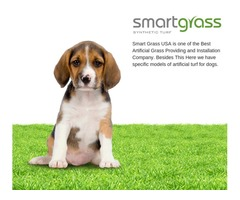 Buy Friendly cost synthetic grass for dogs