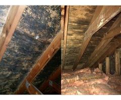 Mold Damage Inspection & Repair Services in Savannah | ServiceMaster of Savannah
