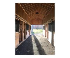 Horse Boarding  | free-classifieds-usa.com