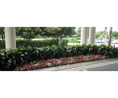 Get the Best Landscape Maintenance in Orlando with Proscape
