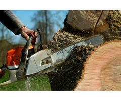 Allen Tree removal - LubyTreeService