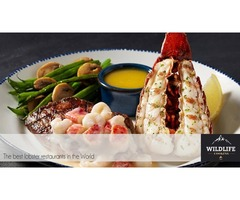 Wildlife Cooking - Lobster | Seafood | Game | Cattle