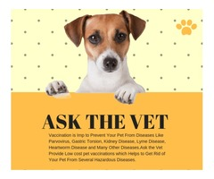 Avail pet services at home by professional home visit vet