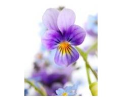 Favorite flower (HOT FLOWER STORE)