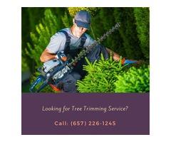 Tree Trimming Orange CA