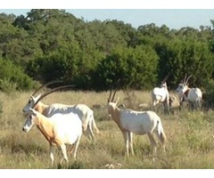 Hunting Ranch for Sale in Texas - Dominion Land