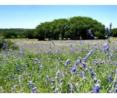 Hunting Ranch for Sale in Texas - Dominion Land | free-classifieds-usa.com