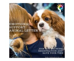 Looking for an Emotional Support Dog Letter