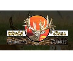 Paid Deer Hunt in Ohio