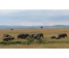 Book Kenya Exclusive Tented Safari at Best Camping Tours & Safaris