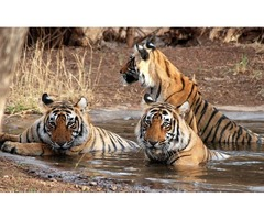 Get 5 Percent Off on India Wildlife Tour Package