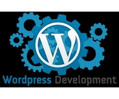 Expert Website Developer in WordPress