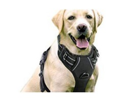 Custom Service Dog Gear