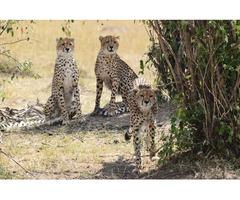 Find Luxury Kenya Wildlife Tours At Best Camping Tours & Safaris