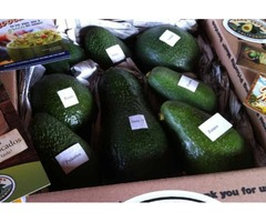 Avocado Monthly: Know Avocado Varieties In Any Season