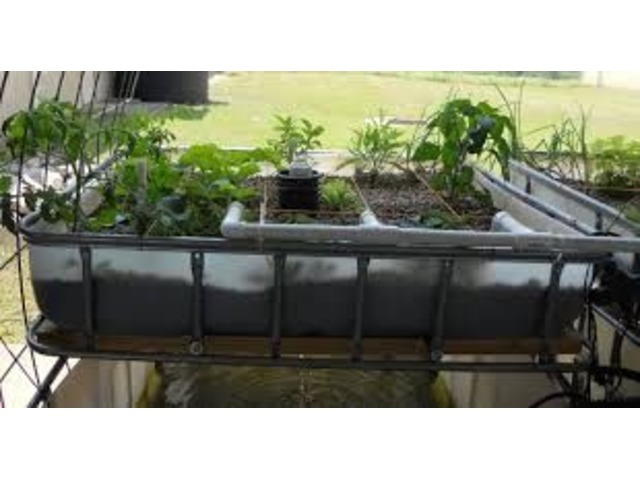 Aquaponics Farming For You | free-classifieds-usa.com