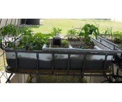 Aquaponics Farming For You