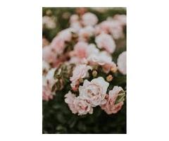 Florist Jacksonville - Spencers Florist Jacksonville FL