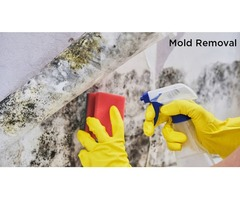 Tips for Hiring Professional Mold Removal Specialists in Hawaii
