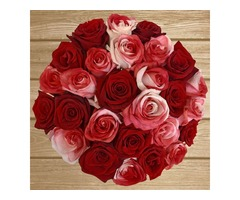 Purchase Variety of Roses at Wholesale